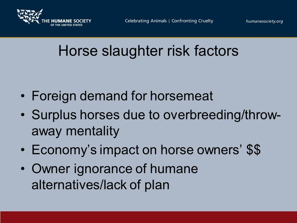 Horse slaughter risk factors Foreign demand for horsemeat Surplus horses due to overbreeding/throw- away mentality Economy's impact on horse owners' $$ Owner ignorance of humane alternatives/lack of plan