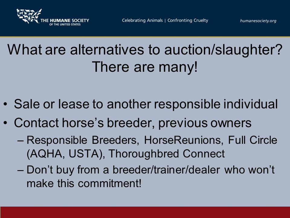 What are alternatives to auction/slaughter. There are many.
