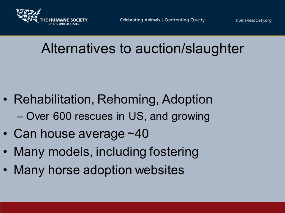 Alternatives to auction/slaughter Rehabilitation, Rehoming, Adoption –Over 600 rescues in US, and growing Can house average ~40 Many models, including fostering Many horse adoption websites