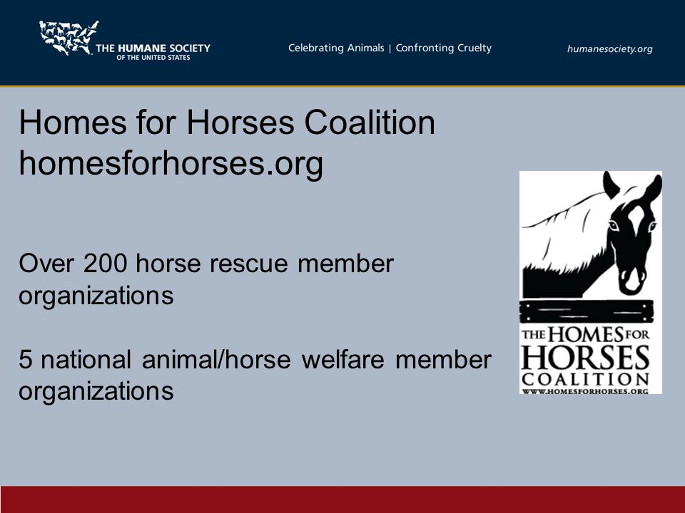 Homes for Horses Coalition homesforhorses.org Over 200 horse rescue member organizations 5 national animal/horse welfare member organizations