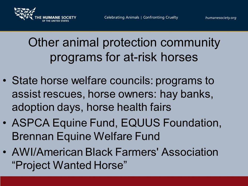 Other animal protection community programs for at-risk horses State horse welfare councils: programs to assist rescues, horse owners: hay banks, adoption days, horse health fairs ASPCA Equine Fund, EQUUS Foundation, Brennan Equine Welfare Fund AWI/American Black Farmers Association Project Wanted Horse