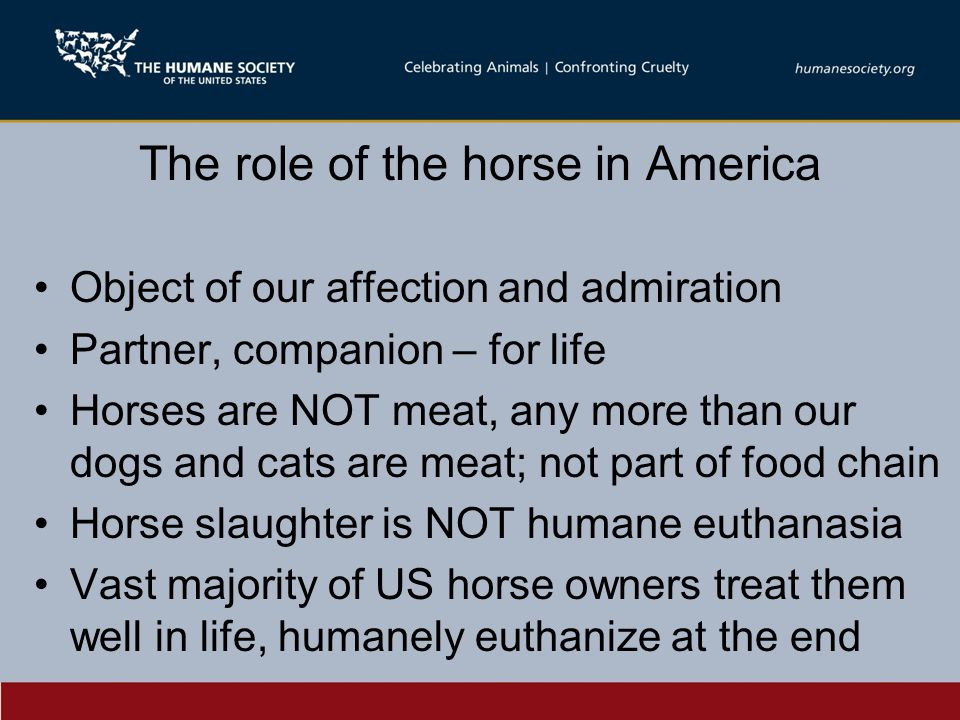 The role of the horse in America Object of our affection and admiration Partner, companion – for life Horses are NOT meat, any more than our dogs and cats are meat; not part of food chain Horse slaughter is NOT humane euthanasia Vast majority of US horse owners treat them well in life, humanely euthanize at the end