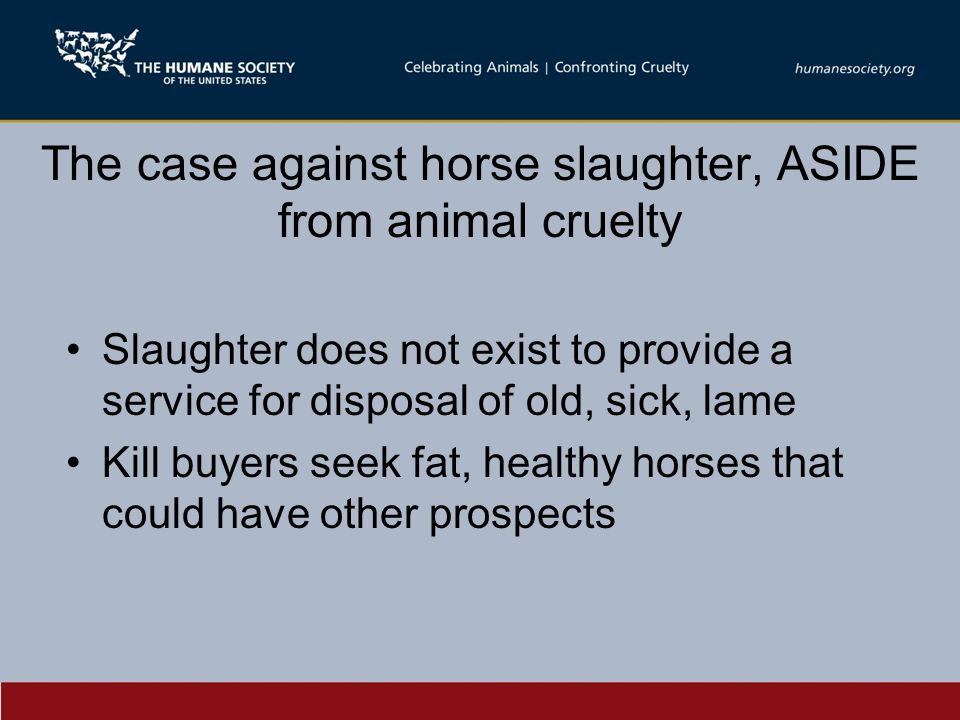 The case against horse slaughter, ASIDE from animal cruelty Slaughter does not exist to provide a service for disposal of old, sick, lame Kill buyers seek fat, healthy horses that could have other prospects