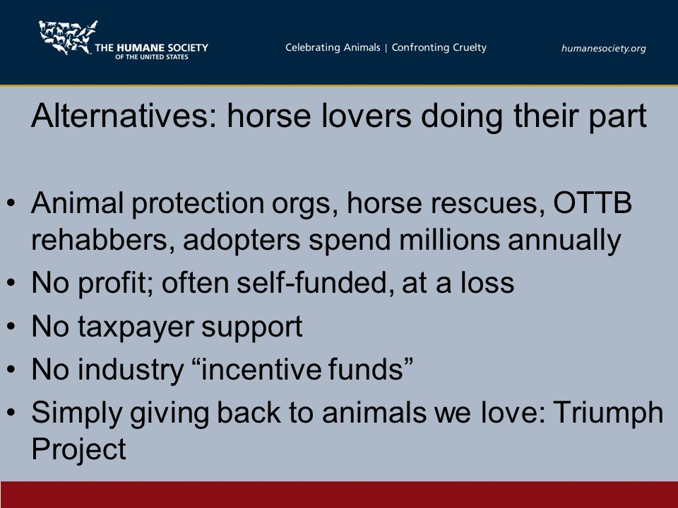 Alternatives: horse lovers doing their part Animal protection orgs, horse rescues, OTTB rehabbers, adopters spend millions annually No profit; often self-funded, at a loss No taxpayer support No industry incentive funds Simply giving back to animals we love: Triumph Project