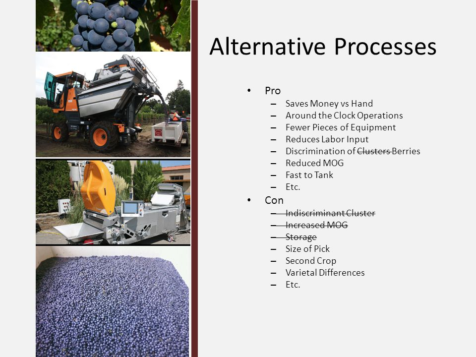Alternative Processes Pro – Saves Money vs Hand – Around the Clock Operations – Fewer Pieces of Equipment – Reduces Labor Input – Discrimination of Clusters Berries – Reduced MOG – Fast to Tank – Etc.