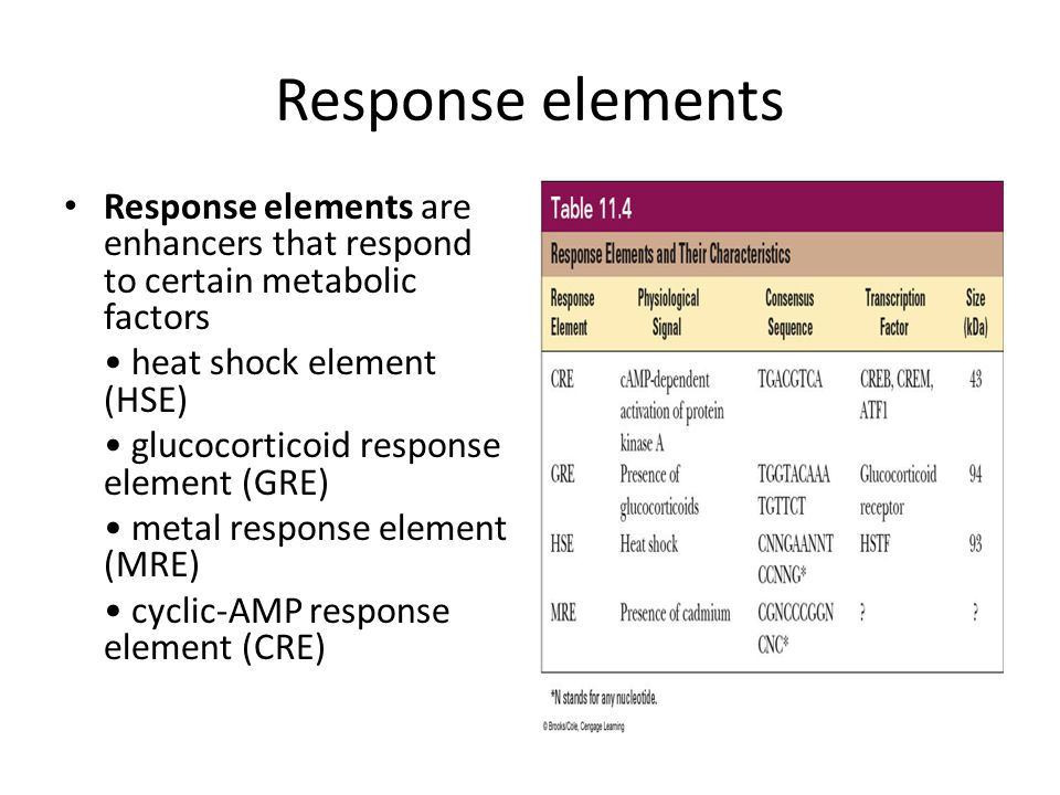 Response elements Response elements are enhancers that respond to certain metabolic factors heat shock element (HSE) glucocorticoid response element (