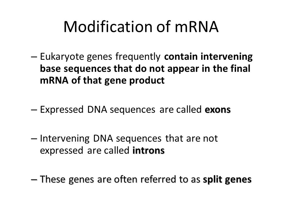 Modification of mRNA – Eukaryote genes frequently contain intervening base sequences that do not appear in the final mRNA of that gene product exons –