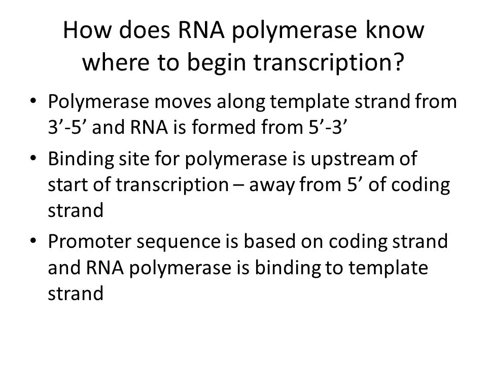 How does RNA polymerase know where to begin transcription? Polymerase moves along template strand from 3'-5' and RNA is formed from 5'-3' Binding site