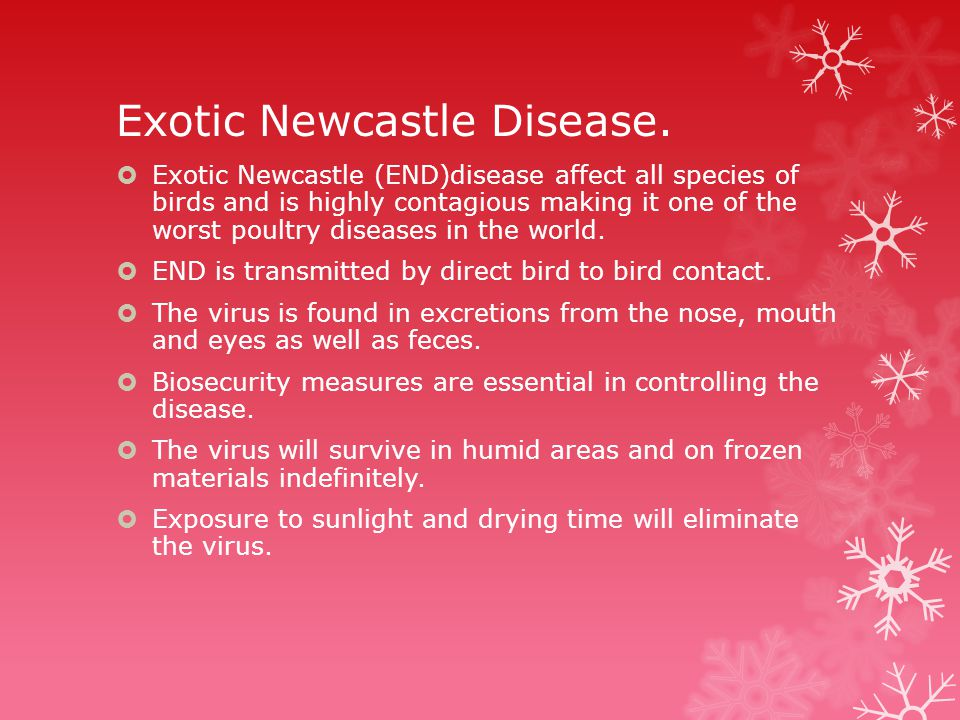 Exotic Newcastle Disease.
