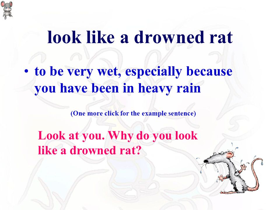 look like a drowned rat to be very wet, especially because you have been in heavy rain Look at you.