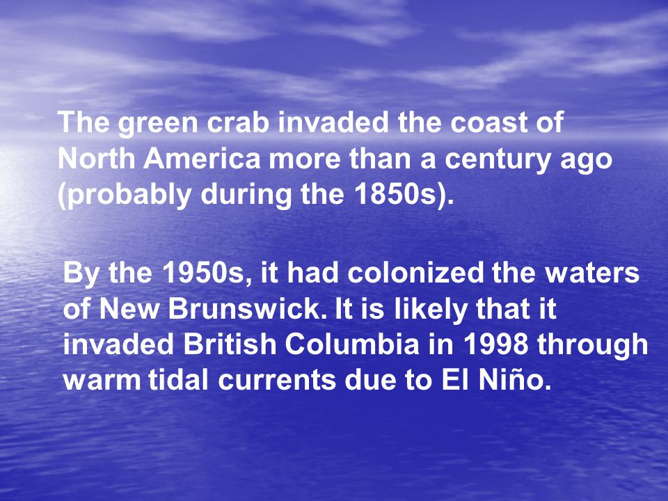The green crab invaded the coast of North America more than a century ago (probably during the 1850s).