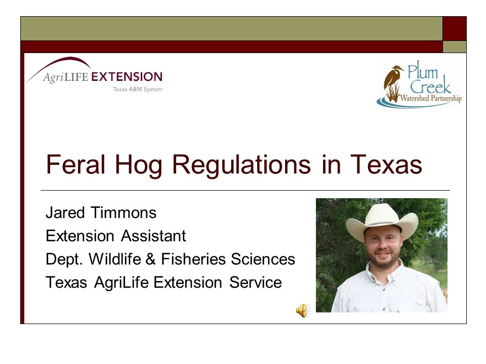 Available resources  http://pcwp.tamu.edu/FeralHogs/ http://pcwp.tamu.edu/FeralHogs/  Publication links Recognizing Feral Hog Sign Snaring Feral Hogs Building a Feral Hog Snare Placing and Baiting Feral Hog Traps Box Traps for Feral Hogs Corral Traps for Feral Hogs Door Modifications for Feral Hog Traps