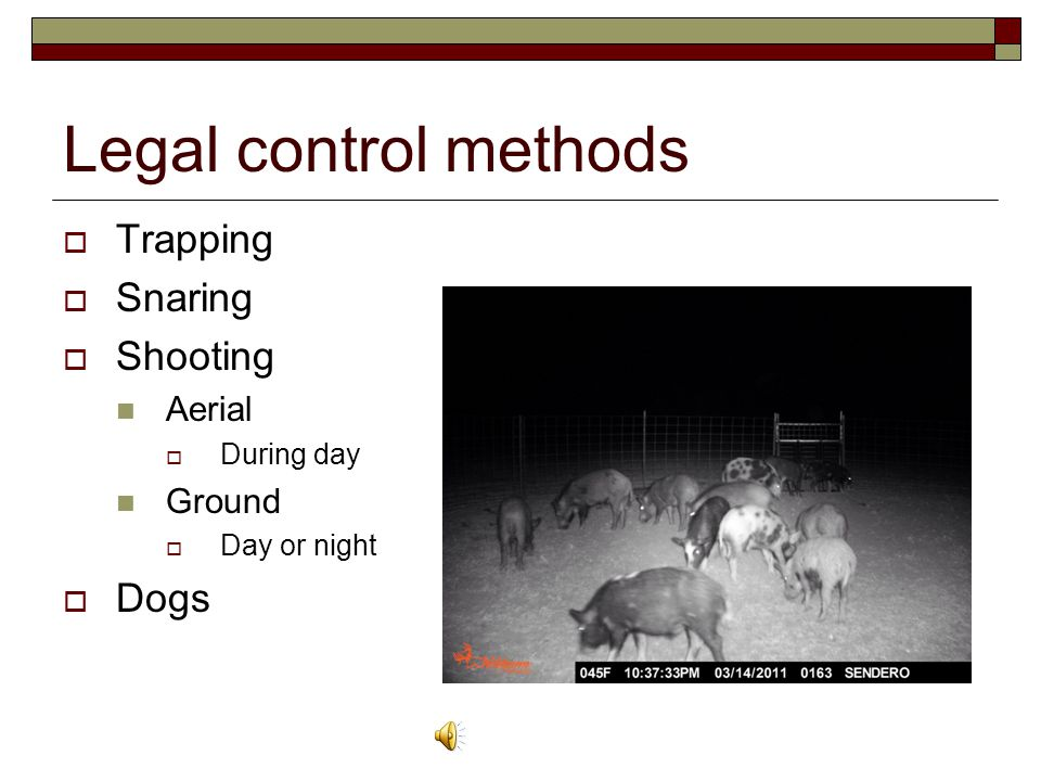 Legal control methods  Trapping  Snaring  Shooting Aerial  During day Ground  Day or night  Dogs