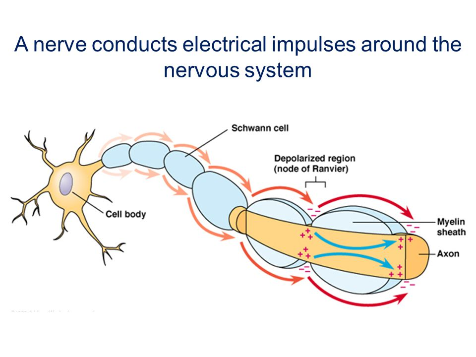 What does Waldenström s neuropathy look like?