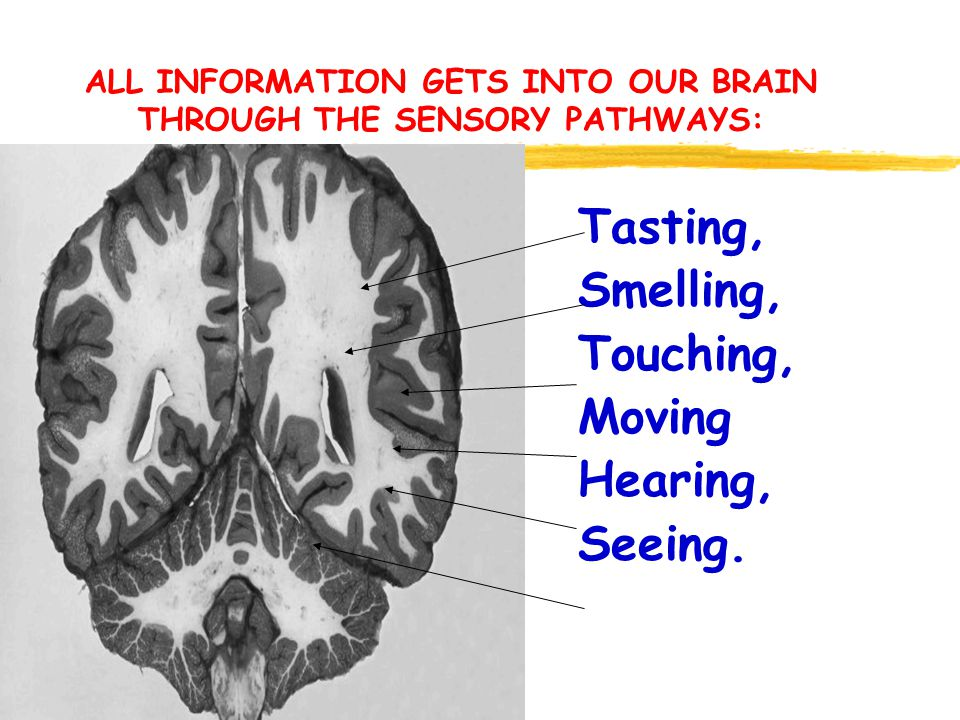 ALL INFORMATION GETS INTO OUR BRAIN THROUGH THE SENSORY PATHWAYS: Tasting, Smelling, Touching, Moving Hearing, Seeing.