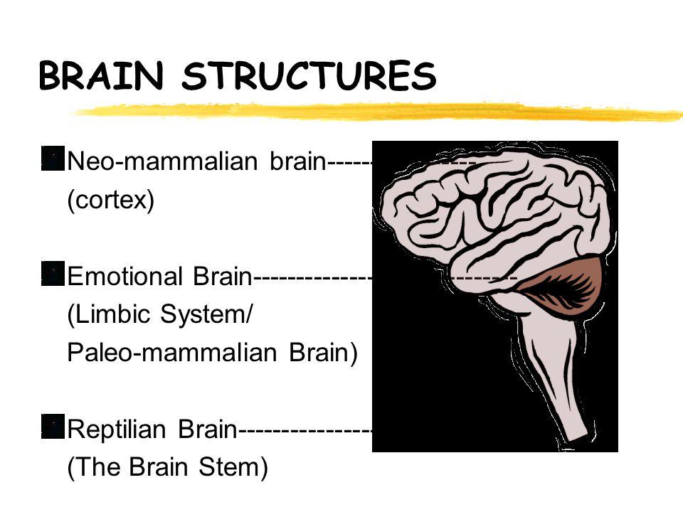 BRAIN STRUCTURES Neo-mammalian brain----------------- (cortex) Emotional Brain------------------------------ (Limbic System/ Paleo-mammalian Brain) Reptilian Brain--------------------------------- (The Brain Stem)