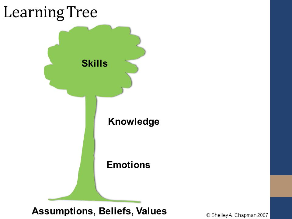 Assumptions, Beliefs, Values Knowledge Skills Emotions Learning Tree © Shelley A. Chapman 2007