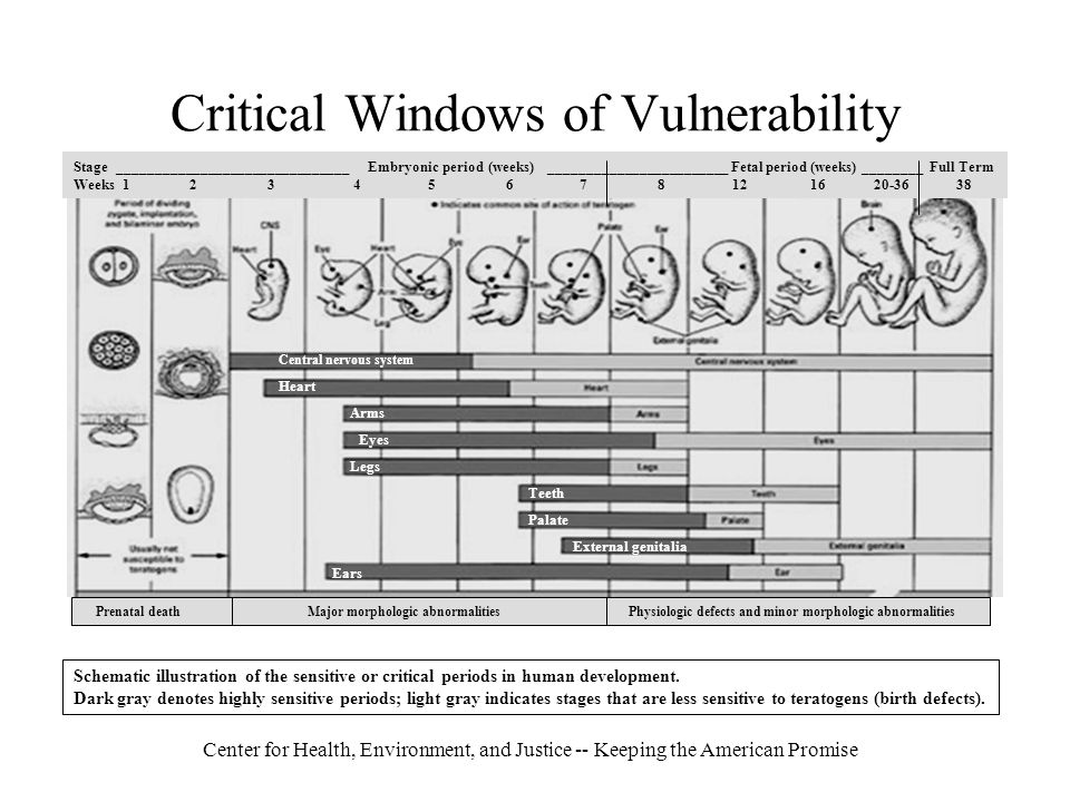 Center for Health, Environment, and Justice -- Keeping the American Promise Critical Windows of Vulnerability Schematic illustration of the sensitive or critical periods in human development.