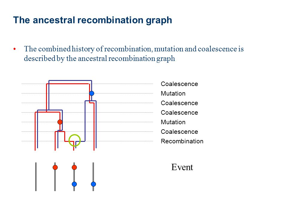 Modelling recombination Model-based approaches to learning about recombination allow us to ask more detailed questions than nonparametric approaches –What is the rate of recombination (as opposed to just the number of events) –Is the rate of recombination across a region constant.