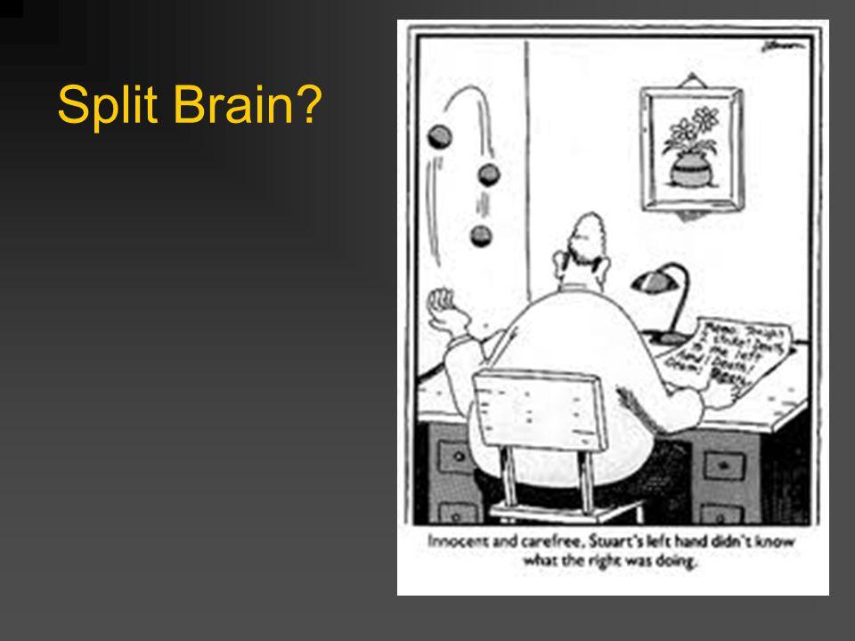Split Brain?