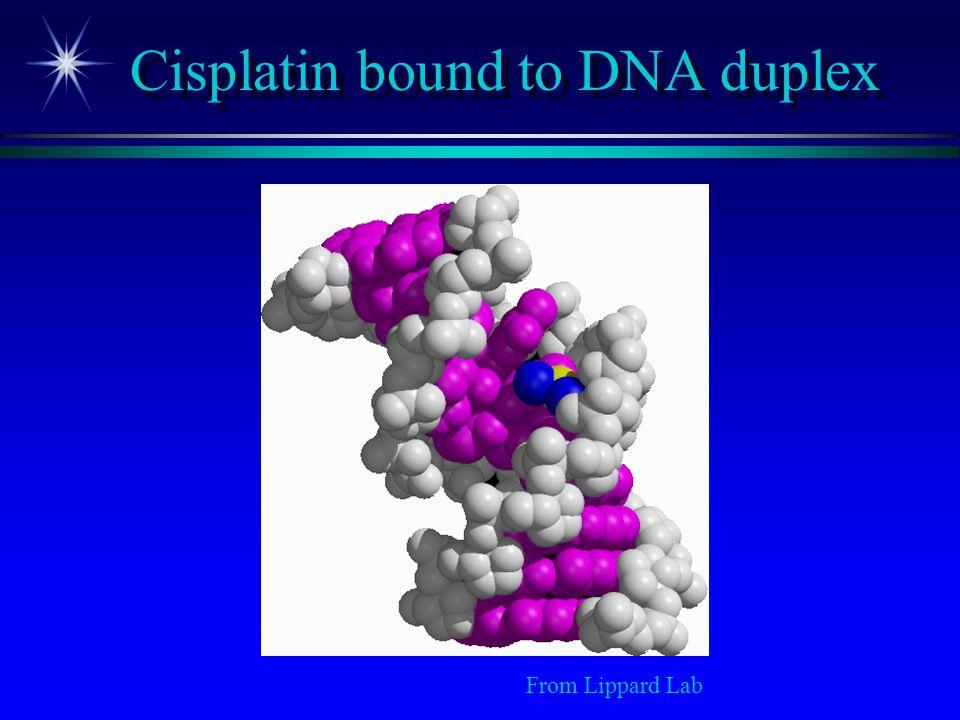 Cisplatin bound to DNA duplex From Lippard Lab