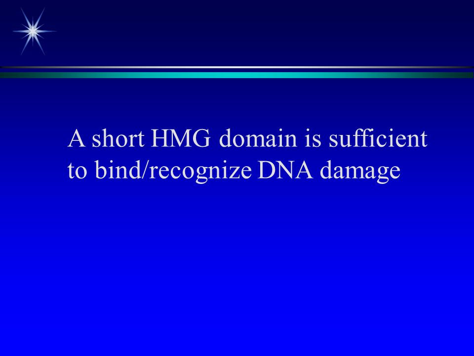 A short HMG domain is sufficient to bind/recognize DNA damage
