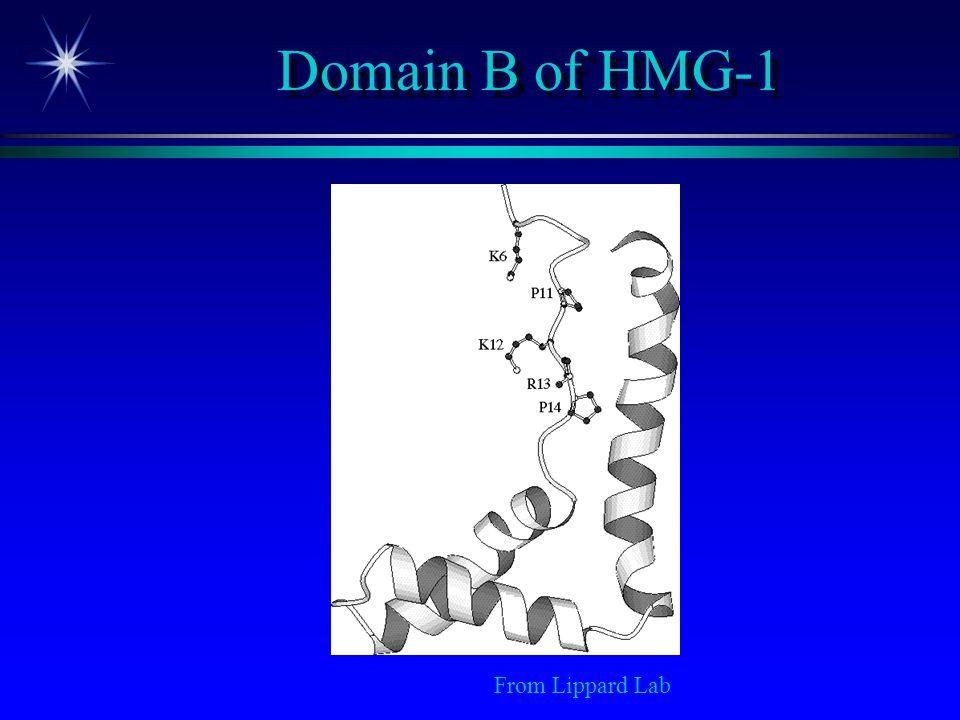 Domain B of HMG-1 From Lippard Lab