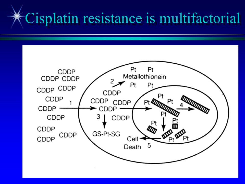 Cisplatin resistance is multifactorial