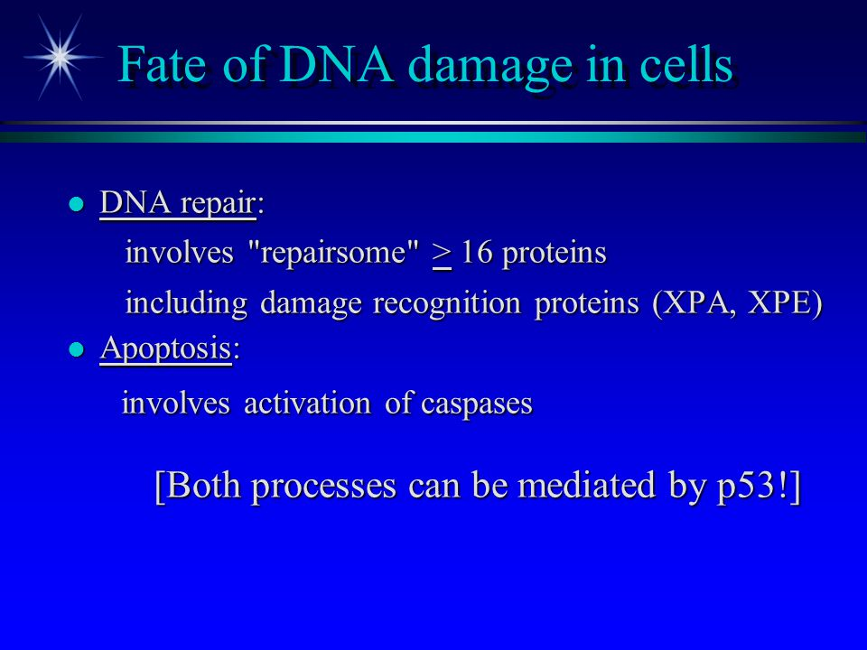 Fate of DNA damage in cells l DNA repair: involves