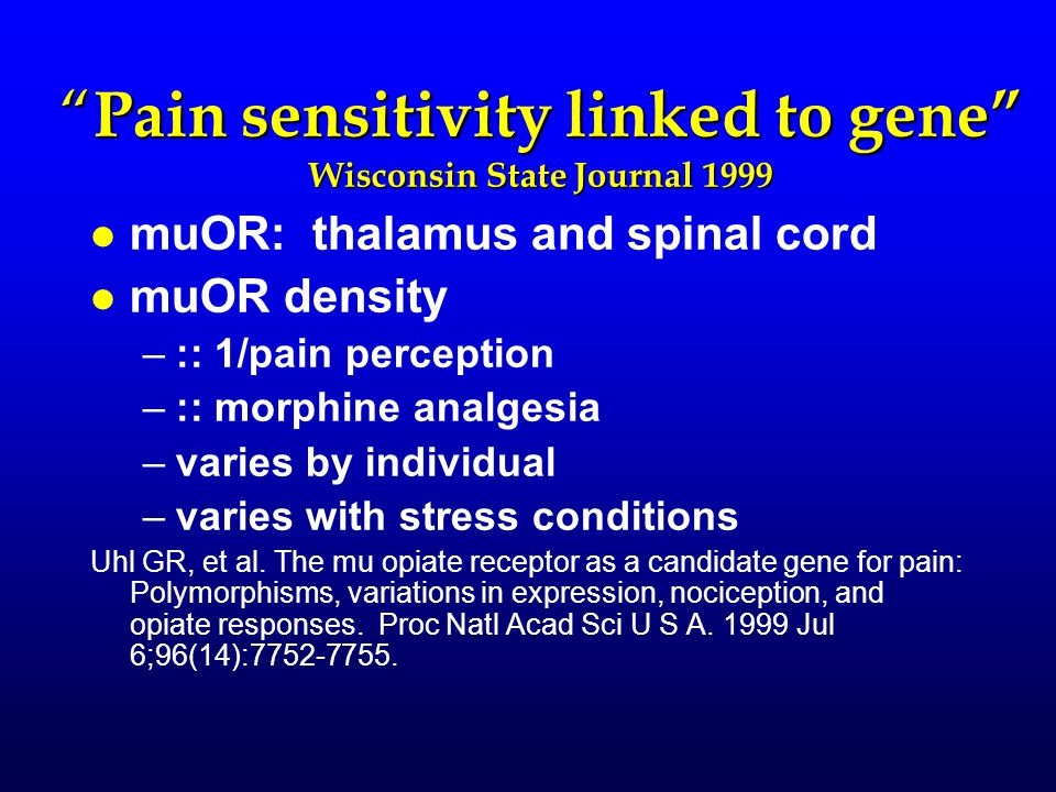 """ Pain sensitivity linked to gene"" Wisconsin State Journal 1999 l l muOR: thalamus and spinal cord l l muOR density – –:: 1/pain perception – –:: morp"