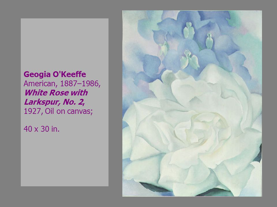 Geogia O Keeffe American, 1887–1986, White Rose with Larkspur, No.
