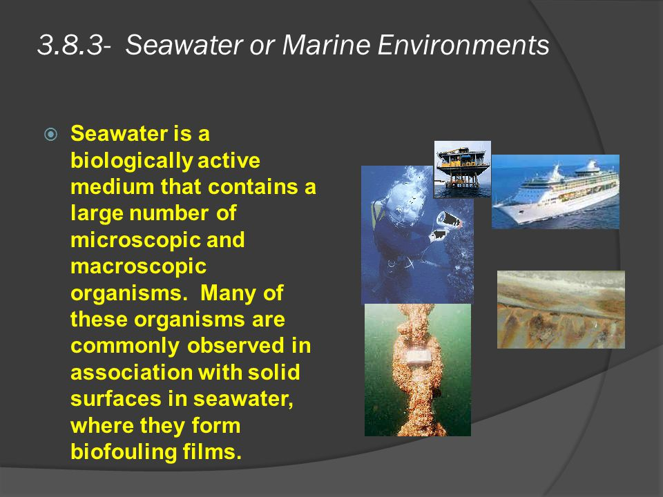 3.8.3- Seawater or Marine Environments  Seawater is a biologically active medium that contains a large number of microscopic and macroscopic organism