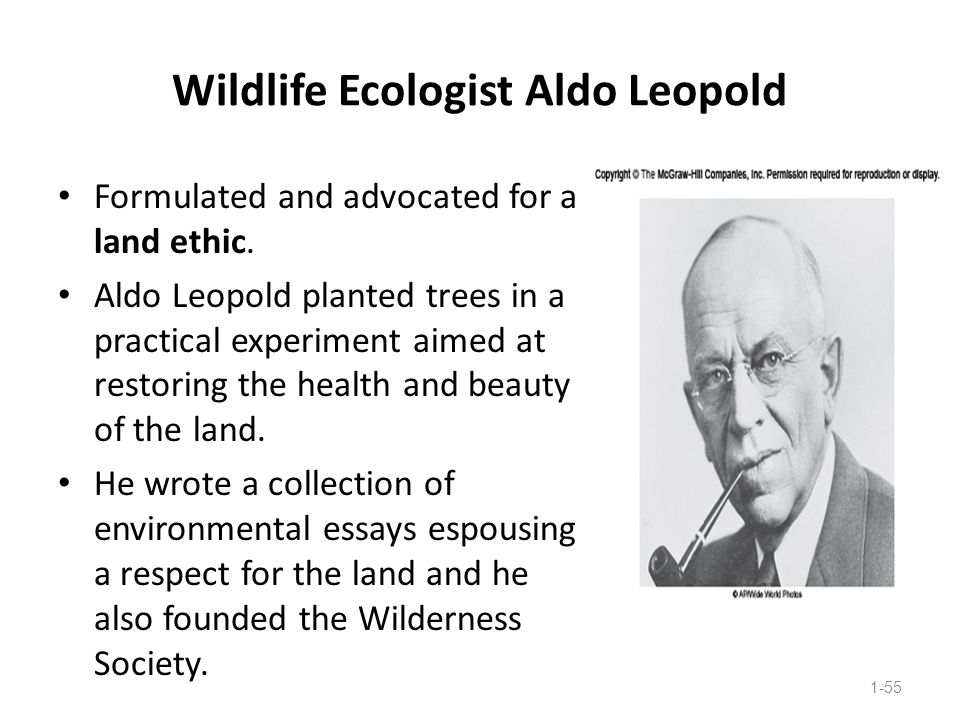 Wildlife Ecologist Aldo Leopold Formulated and advocated for a land ethic. Aldo Leopold planted trees in a practical experiment aimed at restoring the