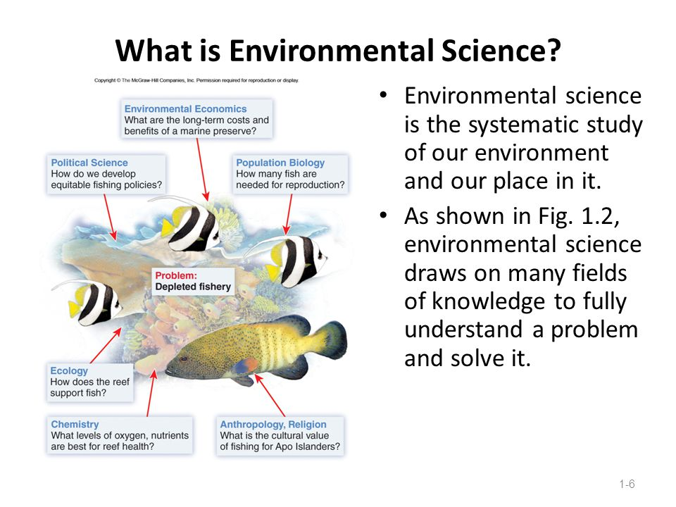 Environmental Science is a Global Subject There are many interdependencies between global and regional environmental systems.