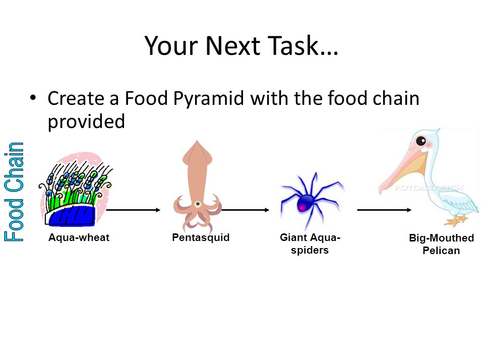 Your Next Task… Create a Food Pyramid with the food chain provided Big-Mouthed Pelican Giant Aqua- spiders Pentasquid Aqua-wheat