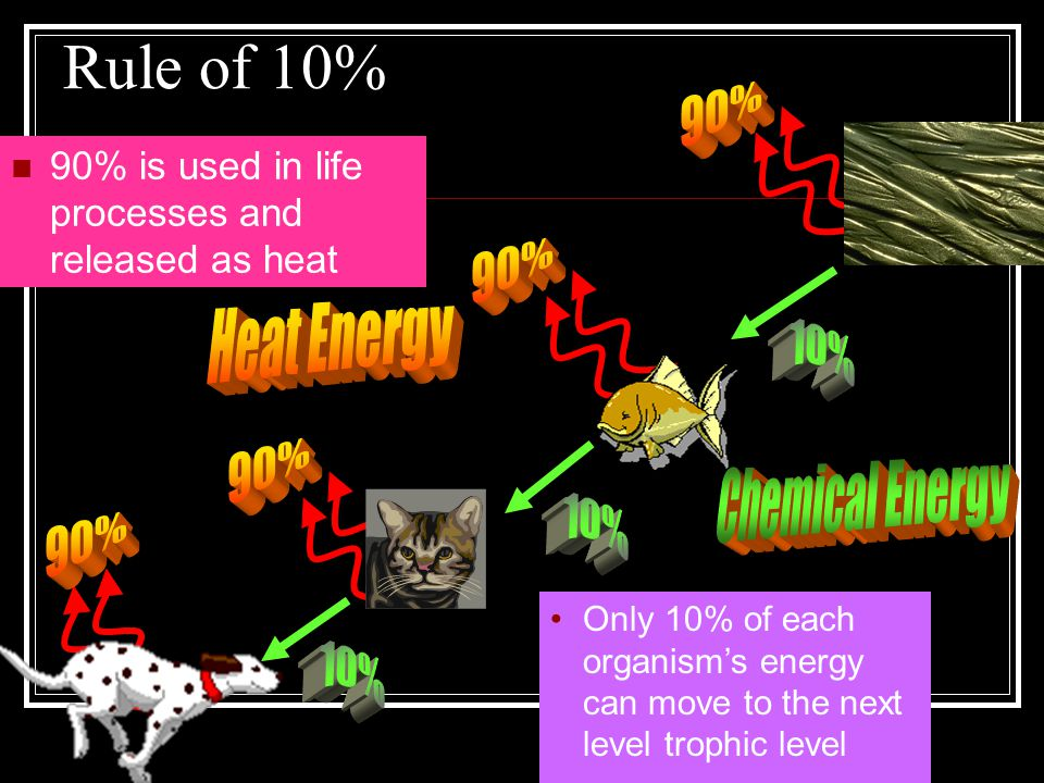 Rule of 10% 90% is used in life processes and released as heat Only 10% of each organism's energy can move to the next level trophic level