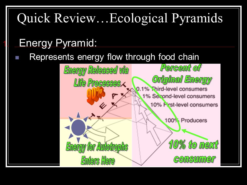 Quick Review…Ecological Pyramids 1. Energy Pyramid: Represents energy flow through food chain
