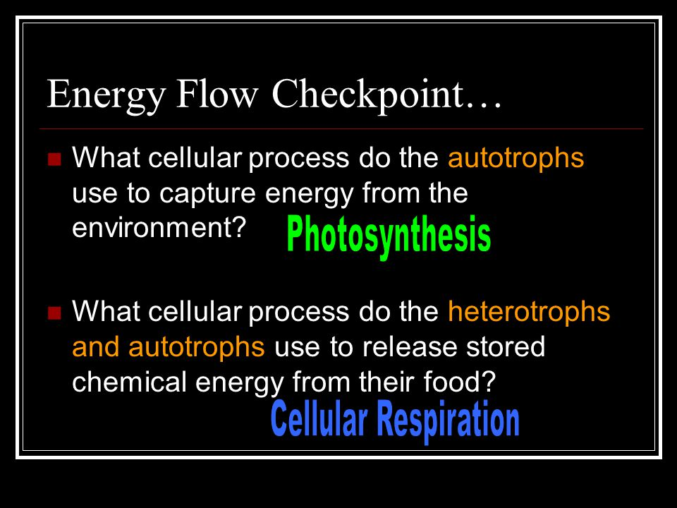 What cellular process do the autotrophs use to capture energy from the environment.