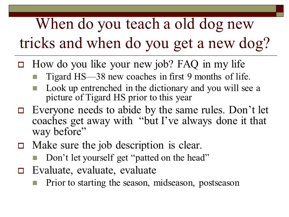 When do you teach a old dog new tricks and when do you get a new dog.