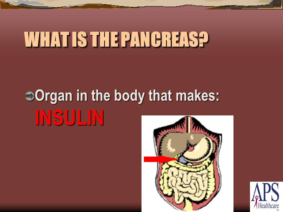 WHAT IS THE PANCREAS  Organ in the body that makes: INSULIN