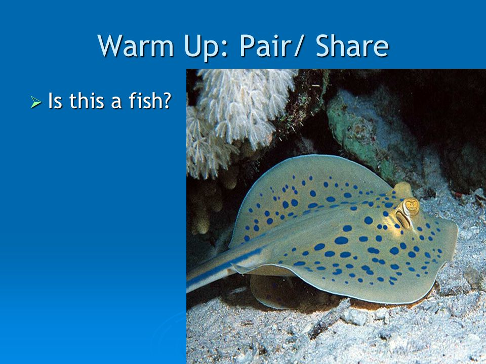 Warm Up: Pair/ Share  Is this a fish?
