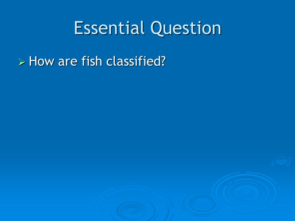 Essential Question  How are fish classified?