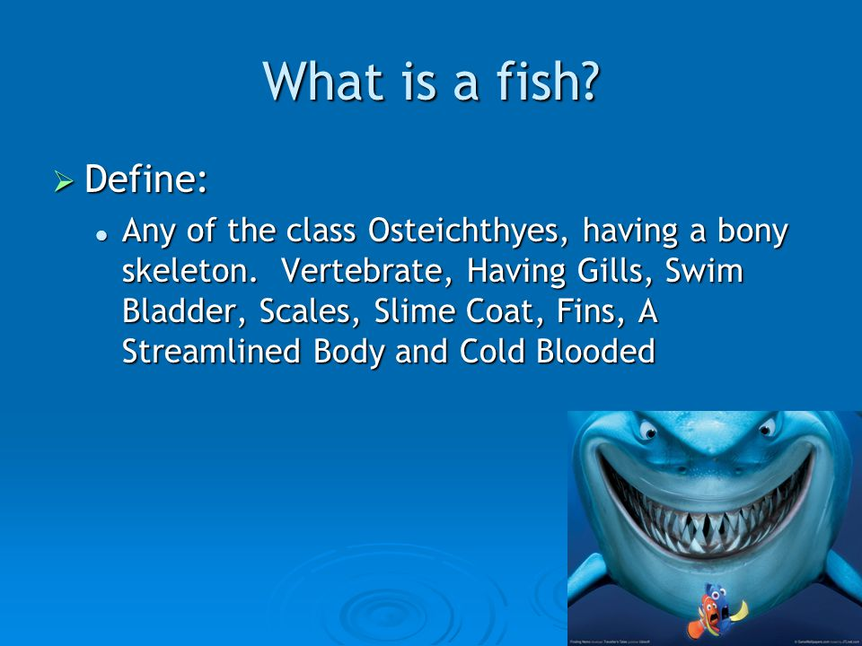 What is a fish.  Define: Any of the class Osteichthyes, having a bony skeleton.