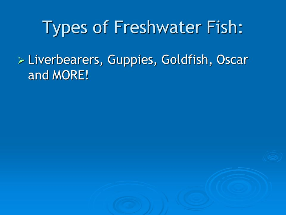 Types of Freshwater Fish:  Liverbearers, Guppies, Goldfish, Oscar and MORE!