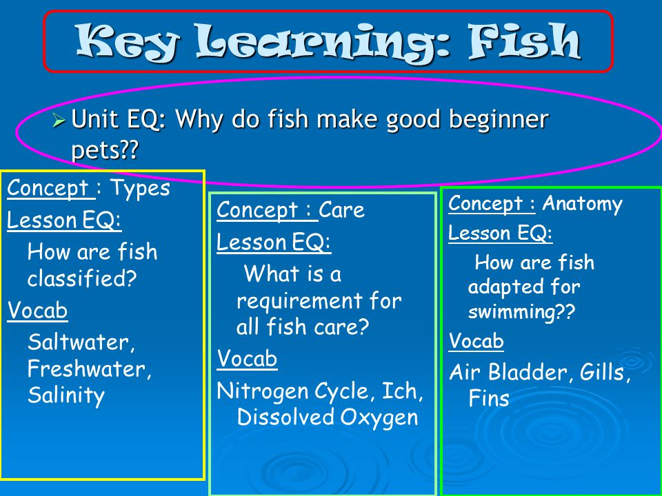 Key Learning: Fish  Unit EQ: Why do fish make good beginner pets .