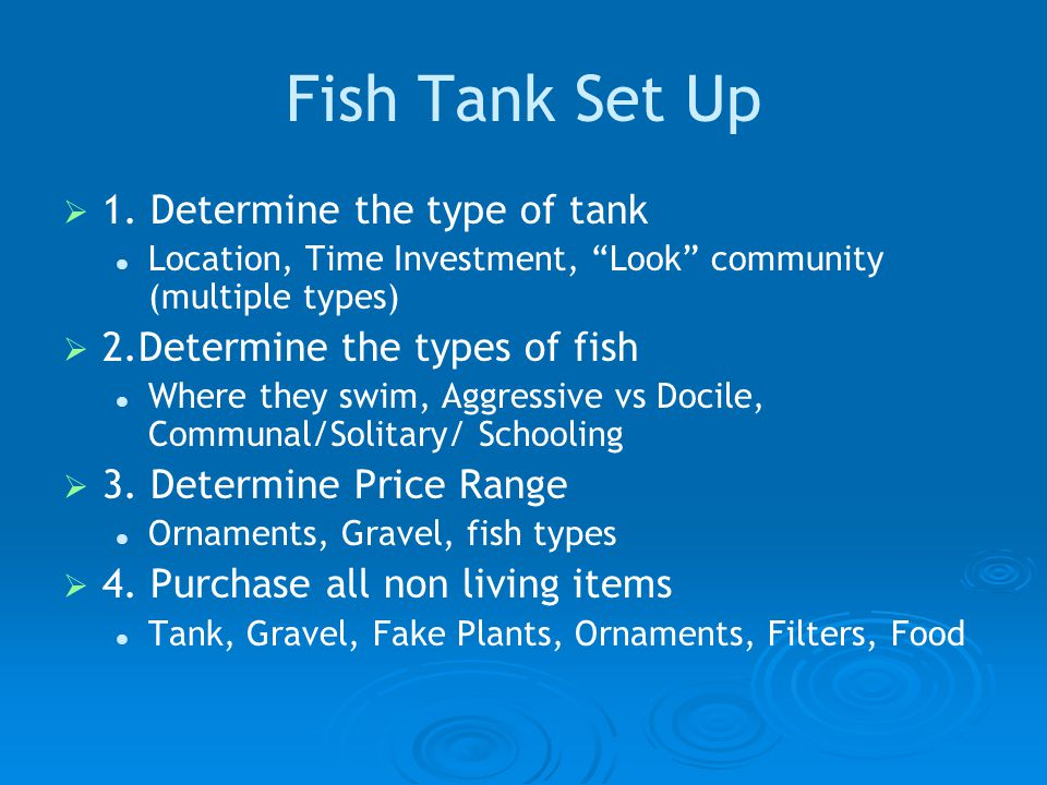 Fish Tank Set Up   1.