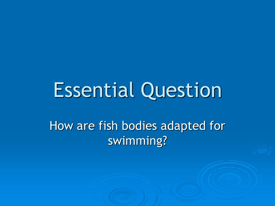 Essential Question How are fish bodies adapted for swimming