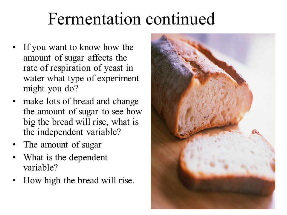 Fermentation continued If you want to know how the amount of sugar affects the rate of respiration of yeast in water what type of experiment might you