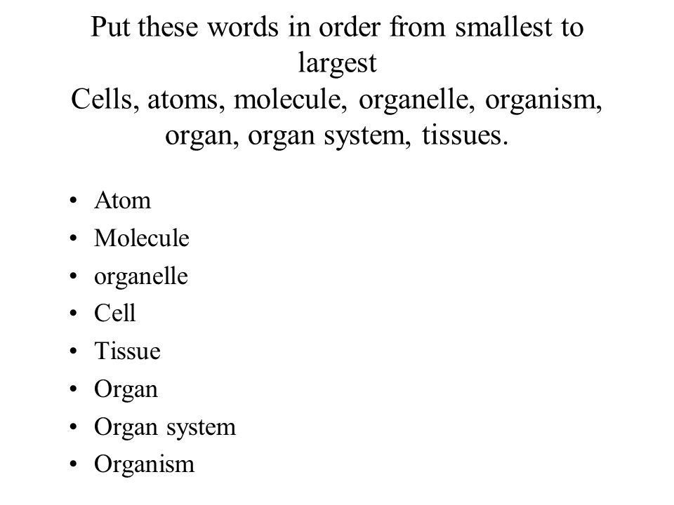 Put these words in order from smallest to largest Cells, atoms, molecule, organelle, organism, organ, organ system, tissues. Atom Molecule organelle C
