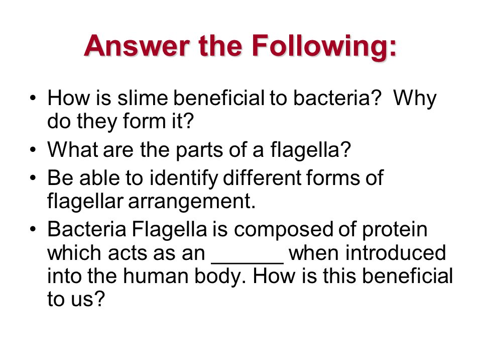 Answer the Following: How is slime beneficial to bacteria.